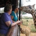 Great Day Excursions to the Giraffe Center