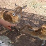 gli animali sono molto vicini e ben tenuti