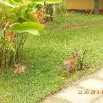 Dik-Diks on the grounds