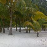 More of the sand and palm trees