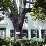 The Patriarch - 2000 year Live Oak