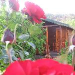 wooden bungalov