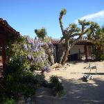 Hotel courtyard Joshua Tree