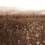 Oak Knoll's Fields