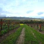 Oak Knolls Fields