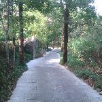 Joggers path