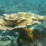 Coral I saw while snorkeling