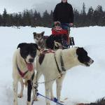 Dog Mushing in Alyeska