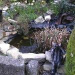 Garden pond with cats...