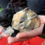 The bunnies had 5 babies