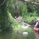 Kayak day tour