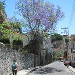 Street to the Hotel covered with Jacaranda blooms and tree