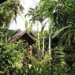 Paradise Rooms in the Jungle