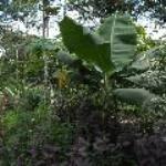 Leticia Amazonas Parque Ecologico