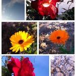 Las flores del Rancho