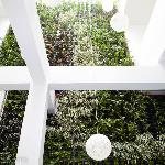 Interior Green Wall