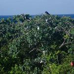 Bird colony from observation stand