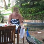 Breakfast with the Peacock