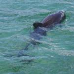 One of two dolphin dancing in front of our boat