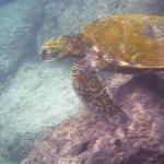 Turtle hanging around
