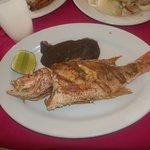 Puerto Morelos la casa del Pescador Grouper like fish dish