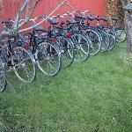 garden/bikes for rent