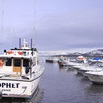 Fishing Fleet Winter 2012