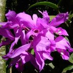 Photo of Monteverde Orchid Garden