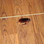 huge cockroach found in room. yuk!!