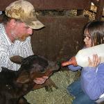 Feeding a dogie (orphan) calf.