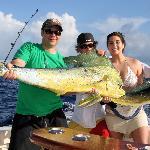 Dolphin fish (Mahi Mahi)
