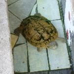 Turtle in front of the hotel