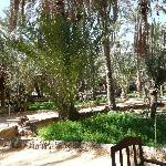 Lodges au milieu de la palmeraie