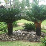 Lots of palms