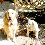 Kingston and buddy