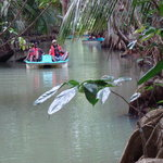 Mangrove Bay river tours