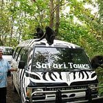 Safari minibus with Black Macaques @ Tangkoko