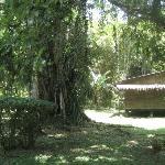 The lush jungle, surrounding the casitas