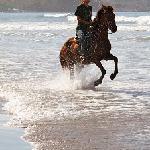Horse back riding Tours Playa Carmen