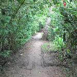 Path that leads to the beach