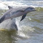 One of 100 photos I took of the many dolphins we saw.