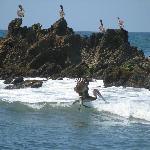 Amazing pelicans
