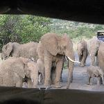Elephant family on our game drive