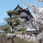 国宝犬山城 桜も美しい