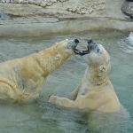 Really liked how they play (I mean the polar bears)