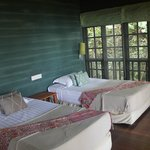 Treehouse 4: Twin beds, wider than the standard single bed, and very comfortable!