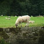 Wall walking lamb