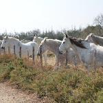 Hotel Mas de Peint's horses