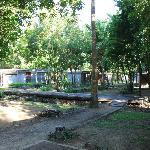 bare garden