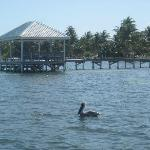 Cocotal pier is easy to identify from the water with the blue palapa roof